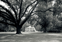 Wesley Mansion and 600 year old Florida Live Oak - Santa Rosa Beach, FL